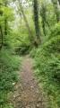 Forêt sauvage à Ennery