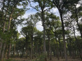 Chemins des deux villages et voies forestières au départ de Meaulne-Vitray