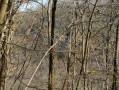 Forêt Wangen