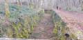 Les Forêts de Gennes à Nancray