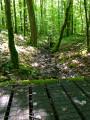 Le Sentier des Salamandres de la Forêt du Temple