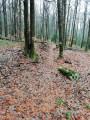Fossé limite de forêt domaniale