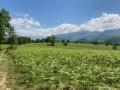 Entre Ogeu-les-Bains et le Gave d'Ossau