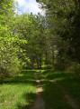 Fraîcheur forestière