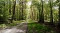 La Forêt de Rosny