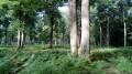 Petite boucle dans le Sud de la Forêt de Saint-Germain-en-Laye