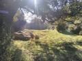 Boucle par la Punta di Pintone à Guincheto