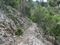 GR9 en forêt