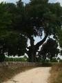 Saint-Sulpice-de-Cognac / Cherves-Richemont - Sentier des Chauffeurs