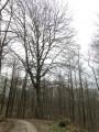 Une promenade en forêt de Montmorency