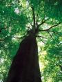 Sentier de découverte de la Forêt de Hagueneau