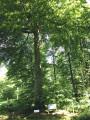 Du Père Antoine à Saint-Paterne en forêt d'Eawy proche des Grandes-Ventes
