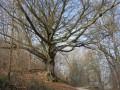Forêt d'Eawy par les bois de Pimont et du Croc