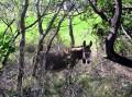 il n'y a pas que des ânes qui marchent!!!