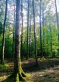 Découvrir la sylviculture en Forêt du Cranou