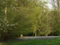 jacinthes des bois dans une clairière
