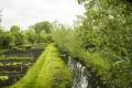 Jardin et canal