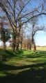 Joli chemin sous les arbres entre le hameau de Stoupignan et Montpitol