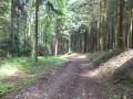 Jolie forêt
