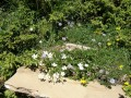 Jolies petites fleurs