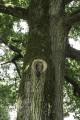 L'aire de pique-nique et ses arbres