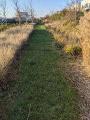 L'allée piétonne en herbe