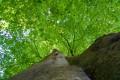 L'arbre de la stelle