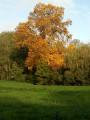 L'arbre en Or