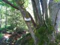 L'arbre gourmand