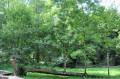 L'arbre remarquable