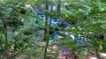 L'eau dans les sous bois
