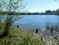 Les étangs et les landes de Campel