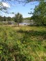L'étang de Massy