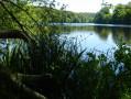L'étang de Villecartier