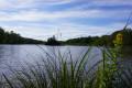 L'étang, début août