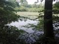En forêt d'Hautvillers