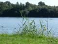 L'étang du Champ Lion