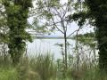 L'étang entre les sarbre