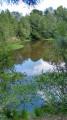 Petit tour en forêt à Rilly-la-Montagne