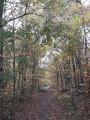 L'intinéraire traverse une forêt de feuillus