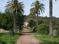 La bastide du domaine de Fabrégas au bout de son allée de palmiers