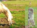 La borne du Roi Soleil et le cheval