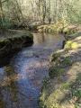 Forêt de Rennes - Le petit circuit de La Caleuvre