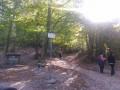 Balade en forêt au Col de la Luère
