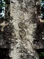 La Croix de Saint-Erminfroi