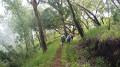 la descente dans la forêt