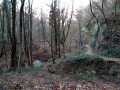 La descente dans les bois