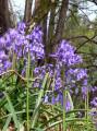 La flore printanière