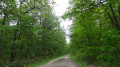 Boucle en forêt d'Orléans depuis Chanteau
