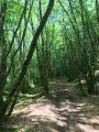 La forêt de Blanchefort